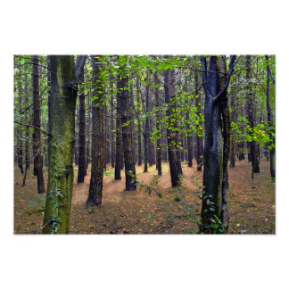 Whitwell Wood Posters