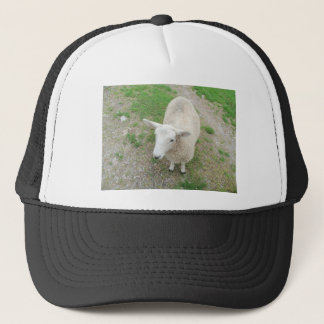 Who Are Ewe Looking At? Trucker Hat