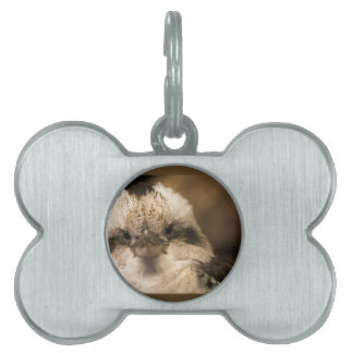 Who Are You Looking At? Pet Tag