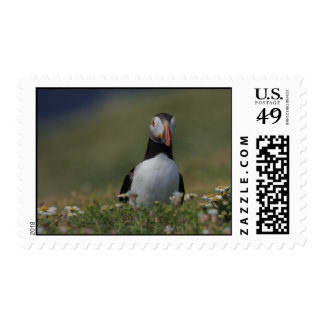 Who Are You Puffin Postage