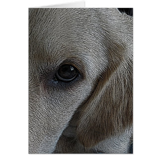 Who can resist the eyes of a new puppy? card