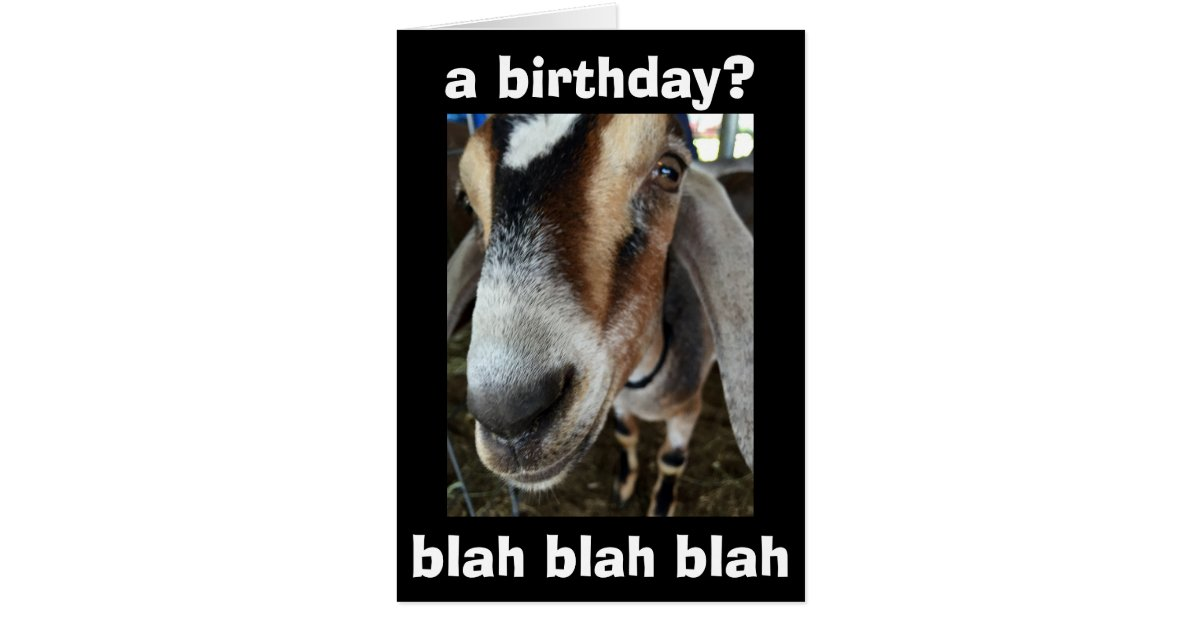 WHO CARES I CARE THE GOAT SAYS HAPPY BIRTHDAY CARD – Goat Birthday Card