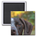 Who Dat Dog? 2 Inch Square Magnet