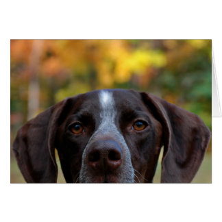 Who Dat Dog? Greeting Card