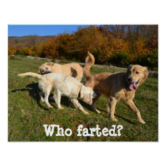 Who Farted? Posters