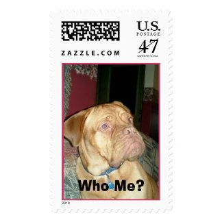 Who Me?  French Mastiff Postage