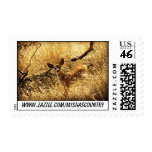 """""""Who You Looking At?"""" Fawn Postage Stamps"""