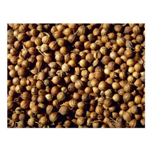 Whole coriander seeds postcard | Zazzle