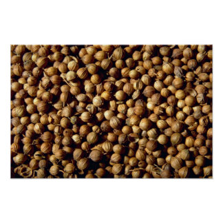 Whole coriander seeds poster