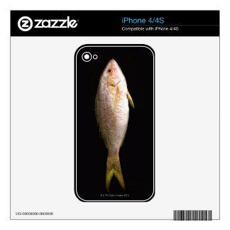 Whole Sea Bass Skin For iPhone 4