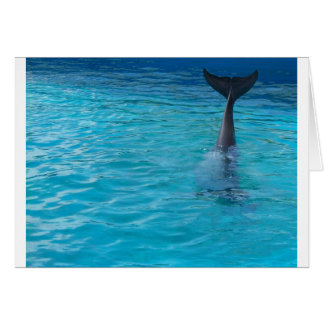 Wholphin tail wave card