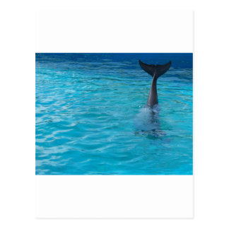 Wholphin tail wave postcard