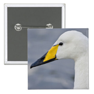 Whooper Swan at a pond in Reykjavik, Iceland. 2 Inch Square Button