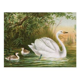 """Whooper Swan"" Vintage Bird Illustration Postcard"