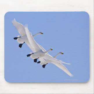 Whooper Swans flying in the sky Mouse Pad