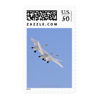 Whooper Swans flying in the sky Postage