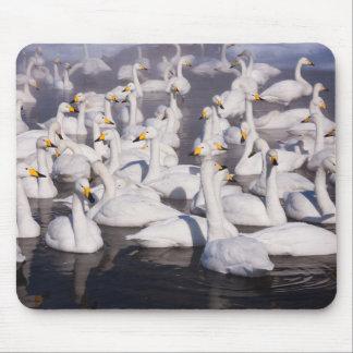 Whooper Swans, Hokkaido, Japan Mouse Pad