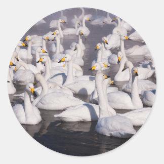 Whooper Swans, Hokkaido, Japan Round Sticker