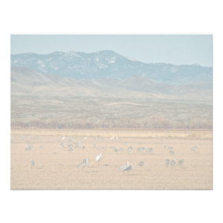 Whooping and Sandhill Cranes Custom Announcements