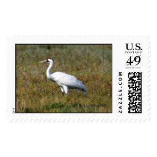 Whooping Crane -1,  Kay Miller 2005 Stamp