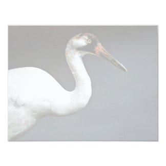 Whooping Crane 4.25x5.5 Paper Invitation Card