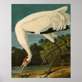 Whooping Crane Audubon Art Poster