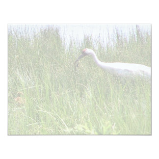 Whooping Crane Feeding a Chick 4.25x5.5 Paper Invitation Card