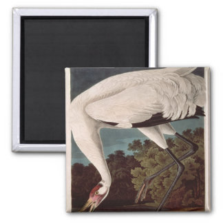 Whooping Crane from Birds of America Fridge Magnets