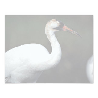 Whooping Crane Personalized Announcements