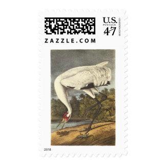 Whooping Crane, John Audubon Postage Stamp