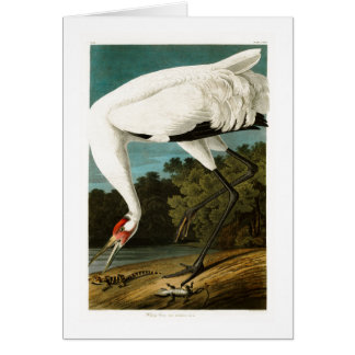 Whooping Crane John James Audubon Birds of America Card