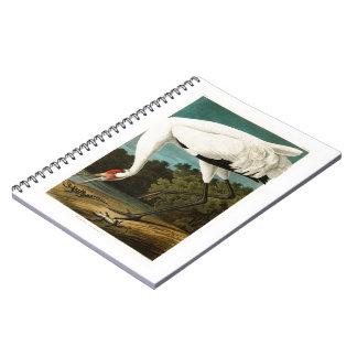 Whooping Crane John James Audubon Birds of America Notebook