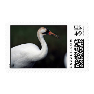 Whooping Crane Postage