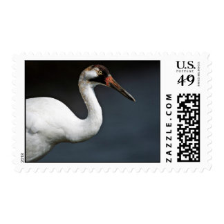 Whooping Crane Postage Stamps