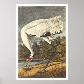 Whooping Crane Print