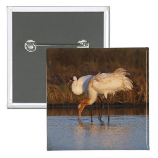 Whooping Crane wintering 2 Button