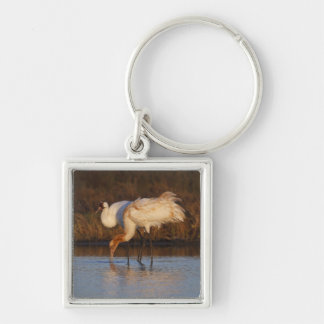 Whooping Crane wintering 2 Keychains