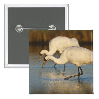 Whooping Crane wintering Button
