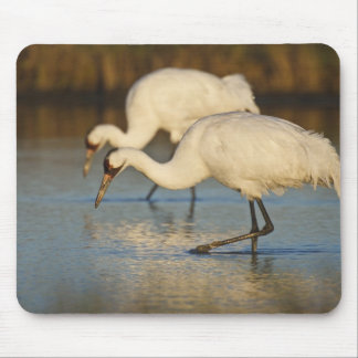 Whooping Crane wintering Mouse Pad