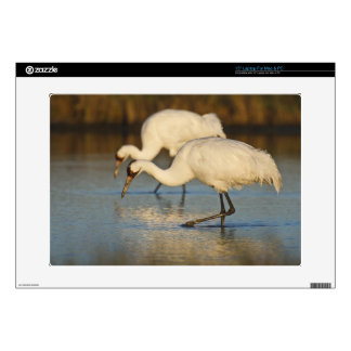 Whooping Crane wintering Skin For Laptop