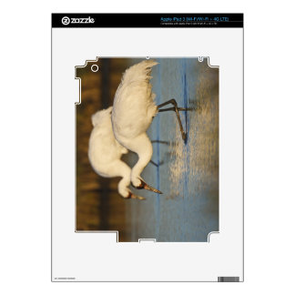 Whooping Crane wintering Skins For iPad 3