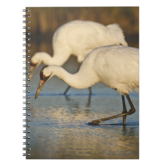 Whooping Crane wintering Spiral Notebook