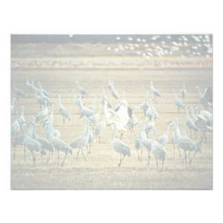 Whooping Crane with Sandhill Cranes Invitations