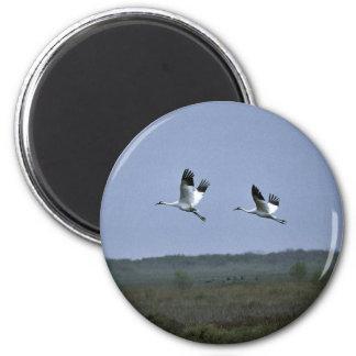 Whooping Cranes at Aransas National Wildlife Refug Magnet