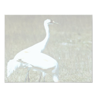 Whooping Cranes Invitations