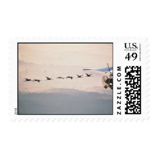 WhoopingCranesFollowUltralite Postage Stamp