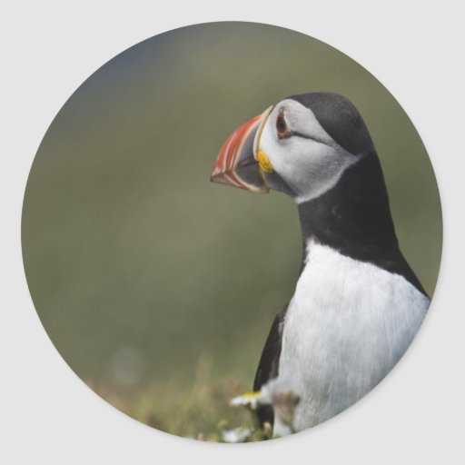 Who's There Puffin Round Sticker