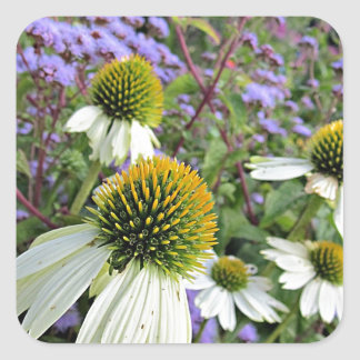 Whte Coneflowers with Blue Square Sticker