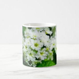 Whte florece la fotografía macra, taza del regalo