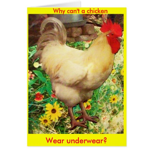 Why can't a Chicken wear underwear Greeting Cards